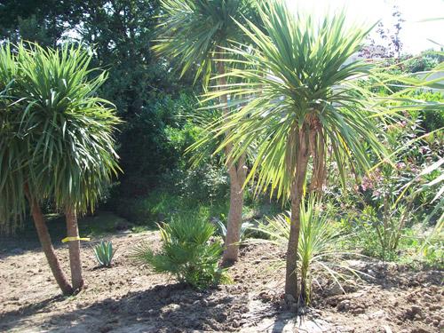 Am nagement paysager dans le pays basque culture jardin for Entretien palmier exterieur